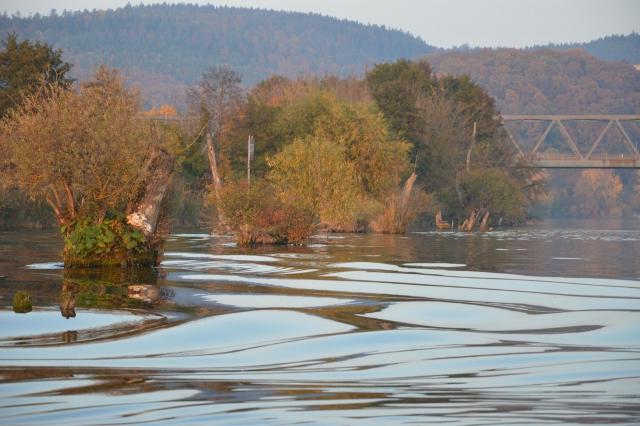 Donau mit Baumstümpfen im Wasser und Brücke im Hintergrund