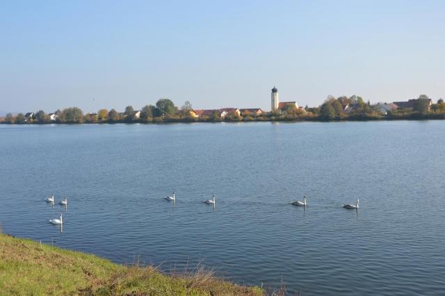 Schwäne auf Donau mit Kirche Demling im Hintergrund