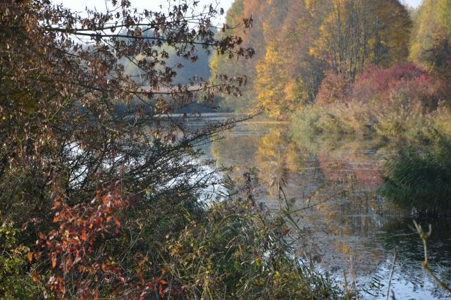 Idyllischer Angelplatz an Seitenarm der Donau