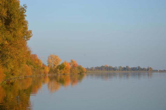 Donau mit herbstlich bewaldetem Flussufer